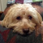 Cute doggie photo